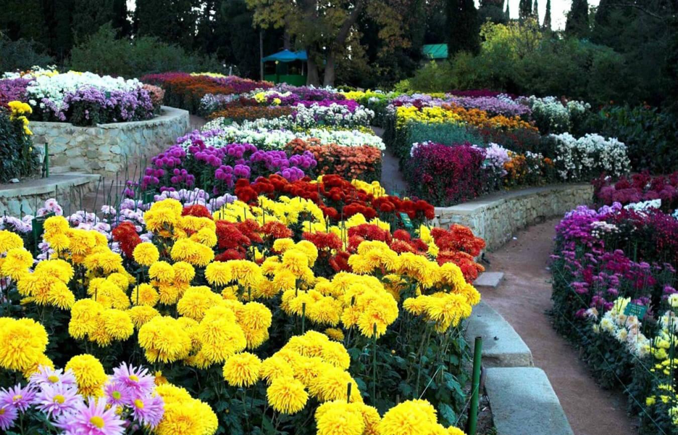 Билеты на Бал хризантем в Никитском Ботаническом саду